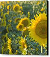 Field Of Happiness Canvas Print