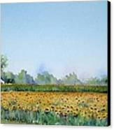 Field Of Sunshine Canvas Print