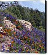 Figueroa Mountain Splendor Canvas Print