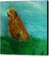 Finigan Iv Canvas Print by Marie Bulger