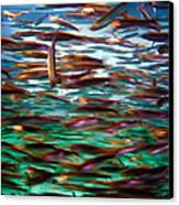 Fish 1 Canvas Print by Dawn Eshelman