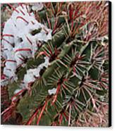 Fish Hook Barrel Cactus With Snow Canvas Print by Susan  Degginger