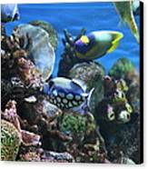 Fish - National Aquarium In Baltimore Md - 1212113 Canvas Print by DC Photographer