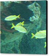 Fish - National Aquarium In Baltimore Md - 1212141 Canvas Print by DC Photographer