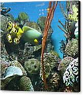 Fish - National Aquarium In Baltimore Md - 121232 Canvas Print by DC Photographer