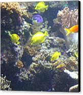 Fish - National Aquarium In Baltimore Md - 121246 Canvas Print by DC Photographer