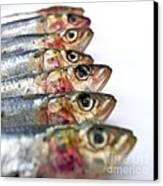 Fishes Canvas Print by Bernard Jaubert