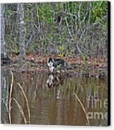 Fishing Feline Canvas Print by Al Powell Photography USA