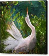 Flamboyant Egret Canvas Print by Melinda Hughes-Berland