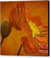 Flaming Beauty Canvas Print by Heiko Koehrer-Wagner