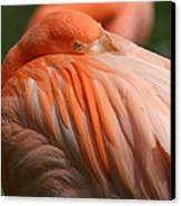 Flamingo 1 Canvas Print by Maxwell Amaro