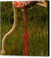 Flamingo Canvas Print by Jennifer Burley