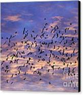 Flight Of The Blackbirds Canvas Print