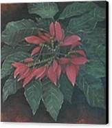 Flor De Pascua Canvas Print by Maurice Dilan