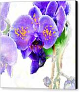 Floral Series - Orchid Canvas Print by Moon Stumpp