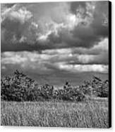 Florida Everglades 0184bw Canvas Print by Rudy Umans