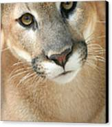 Florida Panther Canvas Print by Karen Lindquist