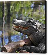 Florida - Where The Alligator Smiles Canvas Print