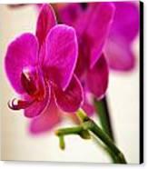 Flower 012 Canvas Print