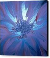 Flower Blue Canvas Print
