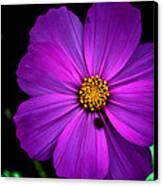 Flower Bug- Viator's Agonism Canvas Print by Vijinder Singh