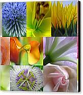 Flower Macro Photography Canvas Print