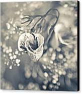 Flower Canvas Print by Mark-Meir Paluksht