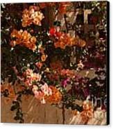 Flower Trellis In La Jolla Canvas Print