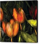 Flower - Tulip -  Orange Irene And Red  Canvas Print