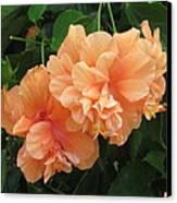 Flowers In Peach Canvas Print