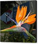Flowers - Us Botanic Garden - 011311 Canvas Print