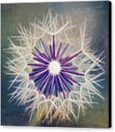 Fluffy Sun - 9bt2a Canvas Print by Variance Collections