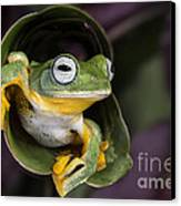 Flying Tree Frog Canvas Print by Linda D Lester
