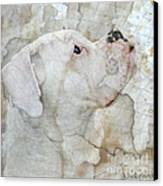 Focus Canvas Print by Judy Wood