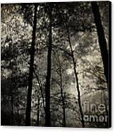 Fog In The Forest Canvas Print