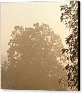 Fog Over Countryside Canvas Print