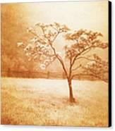 Foggy Spring In The Blue Ridge Mountains Canvas Print by Dan Carmichael