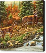 Whitetail Deer - Follow Me Canvas Print by Crista Forest