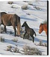 Following Mom  Canvas Print by Jeanne  Bencich-Nations