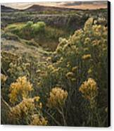 Foothills Sage Canvas Print by Michael Van Beber