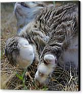 For The Love Of Stretching Canvas Print by Marilyn Wilson
