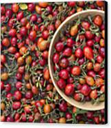Foraged Rose Hips Canvas Print