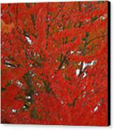Forest Colors Of Fall Canvas Print by Donald Torgerson