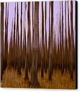Forest Escape Canvas Print