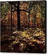 Forest Illuminated Canvas Print