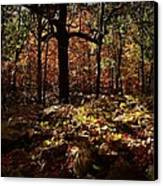 Forest Illuminated Canvas Print by Linda Unger