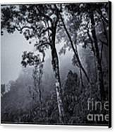 Forest In The Fog Canvas Print