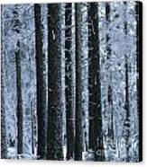 Forest In Winter Canvas Print by Bernard Jaubert