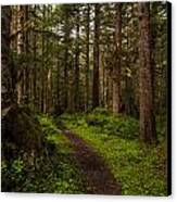Forest Serenity Path Canvas Print by Mike Reid