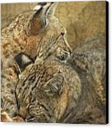 Forever Canvas Print by Teresa Schomig